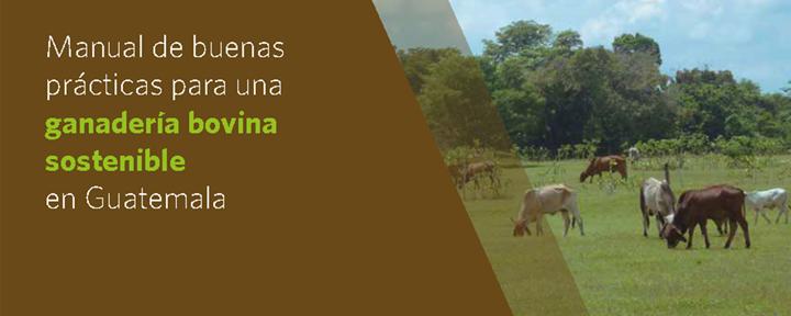 Manual de buenas prácticas para una ganadería bovina sostenible en Guatemala